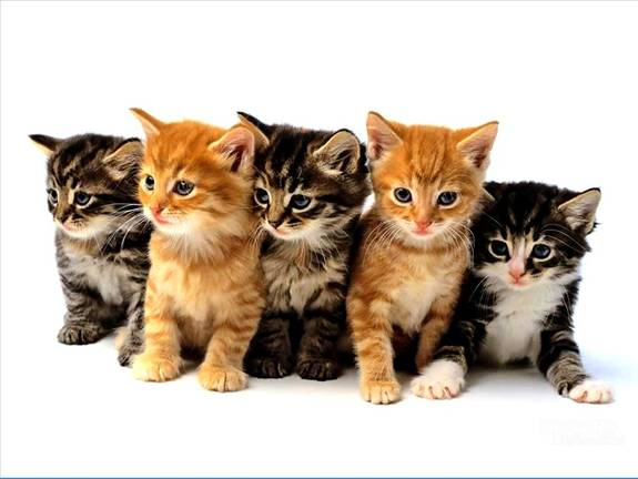 Cute Pictures Of Puppies And Kittens. Cute Kittens Sweet Pets