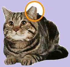 snap spayneuter cats